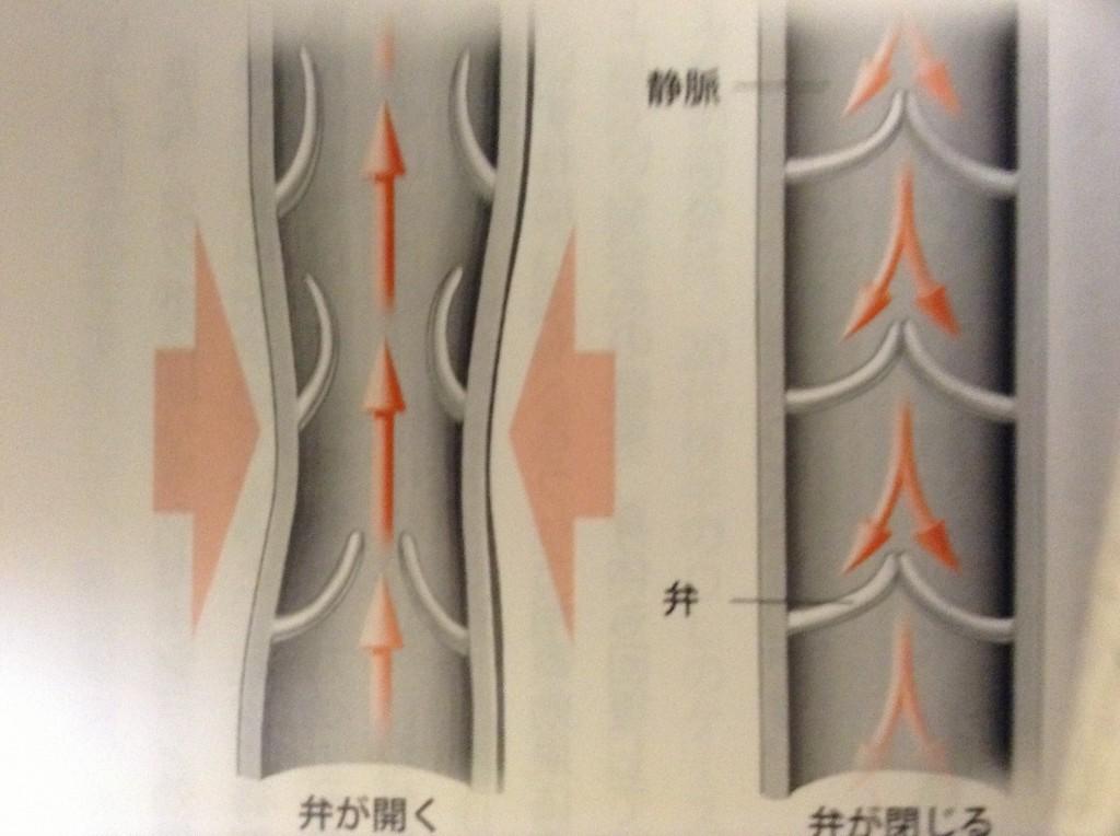 台湾式リフレクソロジー・台湾式足裏・足つぼの効果3 【血液循環の促進】