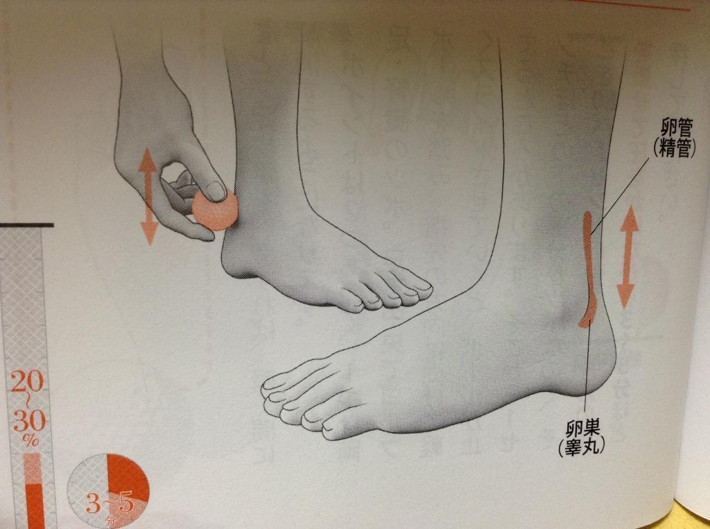 台湾式リフレクソロジー・台湾式足裏・足つぼの効果2 【ホルモンの調節】