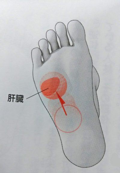 button-only@2x 足つぼ の肝臓のポイントをゴリゴリ押して元気になろう。正しい場所と押し方のコツ!
